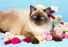 Cat relaxing on blue blanket Royalty Free Stock Photos
