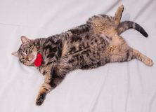 Cat relaxing on the couch. Stock Photos