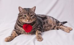 Cat relaxing on the couch. Stock Images