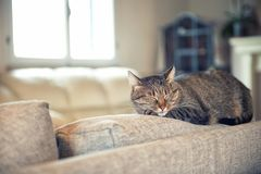 Cat relaxing on couch. Tabby cat relaxing on couch in home Royalty Free Stock Image