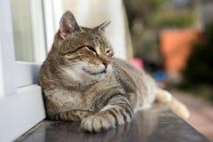 Cat relaxing Stock Image
