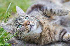 Cat relaxing on the farm Royalty Free Stock Images