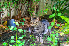 The cat relaxing on floor in the garden. Watch Stock Photography