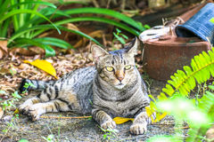 The cat relaxing on floor in the garden. Watch Royalty Free Stock Image