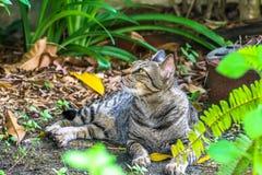 The cat relaxing on floor in the garden Stock Photo