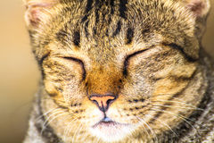 The cat relaxing on floor under car Royalty Free Stock Image