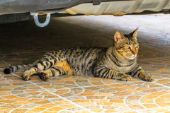 The cat relaxing on floor under car. Watch Royalty Free Stock Photo