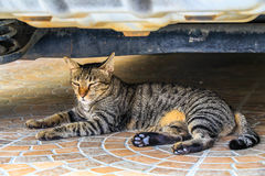 The cat relaxing on floor under car Royalty Free Stock Images