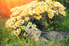 Cat relaxing on flower lawn Stock Images
