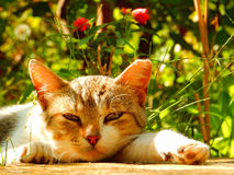 Cat relaxing in the garden. A cat relaxing in a beautiful garden Royalty Free Stock Image