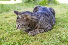 Cat relaxing in the garden Stock Photos