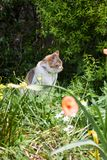 Cat relaxing in the garden. Cat relaxing in the garden with nature background Stock Image