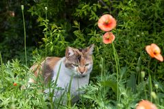 Cat relaxing in the garden. Cat relaxing in the garden with nature background Royalty Free Stock Photos
