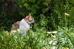 Cat relaxing in the garden. Cat relaxing in the garden with nature background Stock Photos