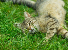 Cat relaxing in the Grass Stock Images