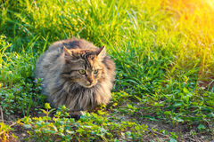 Cat relaxing on the grass Royalty Free Stock Images