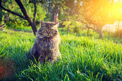 Cat relaxing on the grass Royalty Free Stock Photo