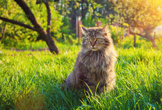 Cat relaxing on the grass Stock Photo
