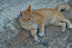 Cat relaxing on ground Royalty Free Stock Photo