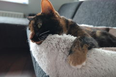 Cat relaxing in her bed Stock Photography