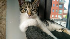 Cat relaxing in het scratching post. royalty free stock photos