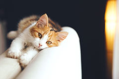 Cat relaxing at home. Adorable cat relaxing on the sofa at home Royalty Free Stock Photo