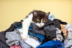 Cat Relaxing on Laundry Stock Photos