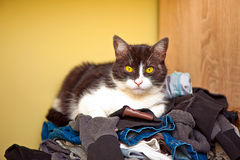 Cat Relaxing on Laundry Royalty Free Stock Photography