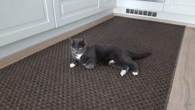 Cat Stock Photography