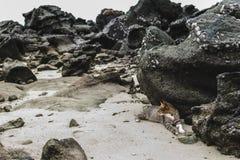 Cat Relaxing Near Phi Phi-Eilanden in Thailand stock afbeeldingen