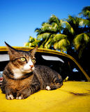 Cat relaxing old classic car tropical island Concept Royalty Free Stock Images
