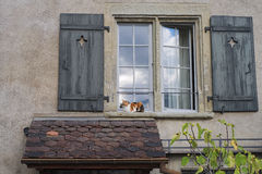 Marvelous Cat Relaxing Outside In A Window Sill In Thun, Switzerland Royalty Free  Stock Images