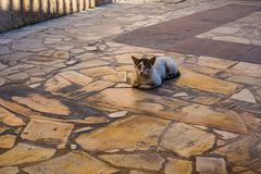 Cat Relaxing på gatan arkivfoton