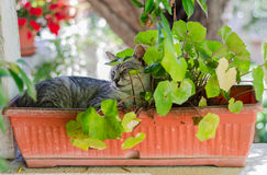 Cat relaxing in plant pot Royalty Free Stock Images