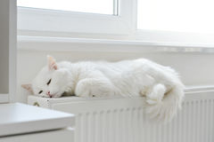 Cat relaxing on the radiator Stock Images