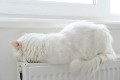 Cat relaxing  on the radiator Royalty Free Stock Photo