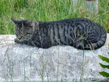 Cat relaxing on a rock Royalty Free Stock Photography