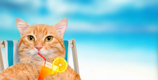 Cat  relaxing sitting on deckchair. Stock Image