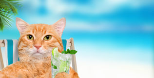Cat  relaxing sitting on deckchair. Stock Photo