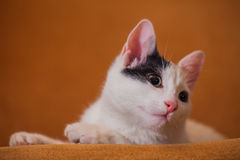 Cat relaxing on sofa Stock Photography