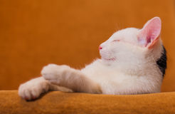 Cat relaxing on sofa Royalty Free Stock Images