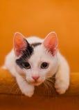 Cat relaxing on sofa Stock Photos