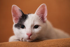 Cat relaxing on sofa Royalty Free Stock Photo