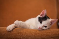 Cat relaxing on sofa Royalty Free Stock Photos