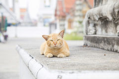 Cat relaxing on the stone bench Stock Images