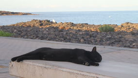 Cat relaxing on a stone bench stock video footage
