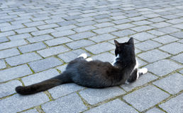 Cat relaxing on the street stones. Big black cat relaxing on the street stones Royalty Free Stock Photography