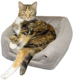 Cat Relaxing strikes a Pose isolated. Tortoiseshell cat relaxes with an attitude Royalty Free Stock Photography