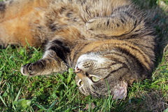 cat relaxing in the sun Royalty Free Stock Photos