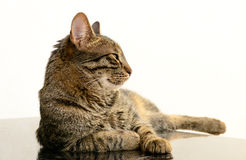 Cat relaxing on the table Stock Photos
